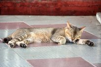 Sleeping cat, Kyaik Tan Lan Pagoda